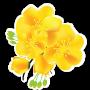 Hoa mai xuân